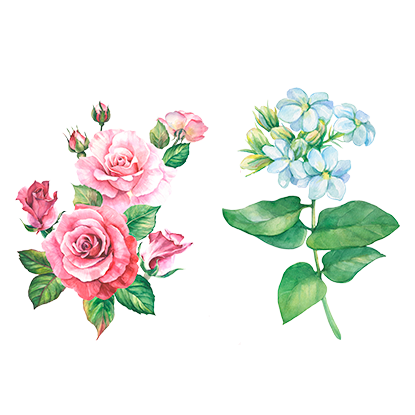 alt.perfume-notas-corazon-dream