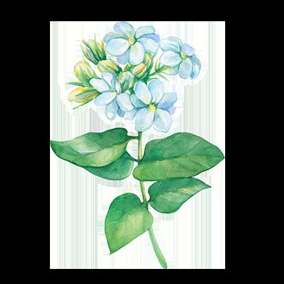 alt.perfume-notas-corazon-s-by-shakira
