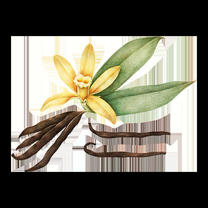 alt.perfume-notas-fondo-s-eau-florale