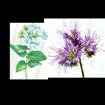 alt.perfume-notas-salida-s-eau-florale