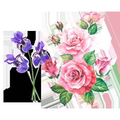 alt.perfume-notas-corazon-s-sugar